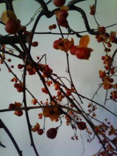 f:id:kusaboshi:20071206133700j:image