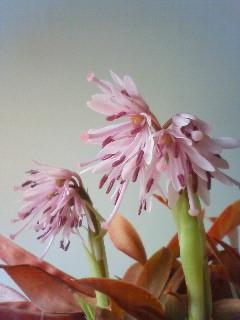f:id:kusaboshi:20080323105800j:image