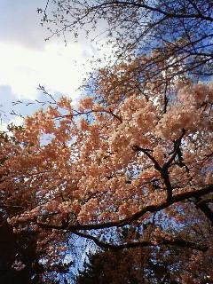 f:id:kusaboshi:20080328101700j:image
