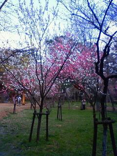 f:id:kusaboshi:20080328101900j:image