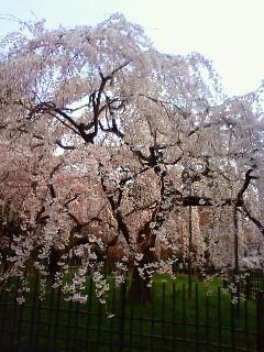 f:id:kusaboshi:20080328102100j:image