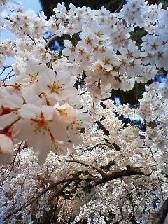 f:id:kusaboshi:20080328102400j:image