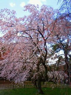 f:id:kusaboshi:20080328103200j:image