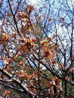 f:id:kusaboshi:20080328103500j:image