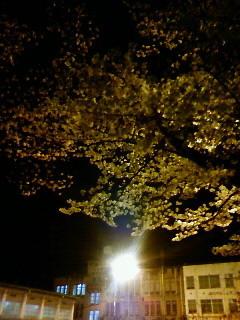 f:id:kusaboshi:20080401200600j:image