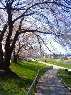 f:id:kusaboshi:20080404093000j:image