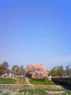 f:id:kusaboshi:20080404094100j:image