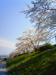 f:id:kusaboshi:20080404094300j:image