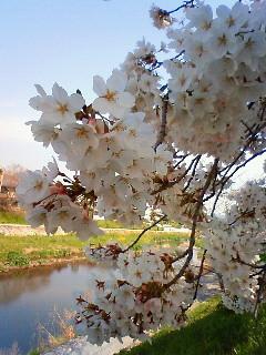 f:id:kusaboshi:20080404094700j:image