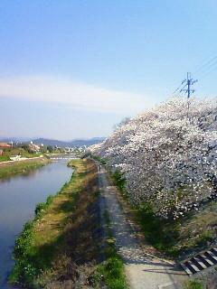f:id:kusaboshi:20080404094900j:image