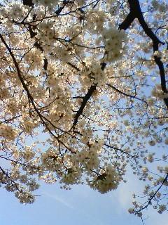 f:id:kusaboshi:20080404095900j:image