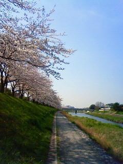 f:id:kusaboshi:20080404100800j:image