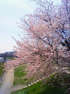 f:id:kusaboshi:20080404102700j:image