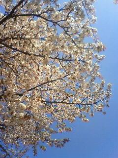 f:id:kusaboshi:20080405102900j:image