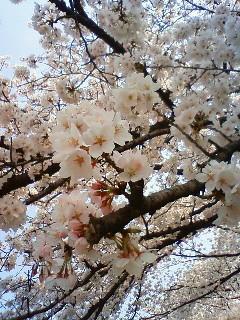 f:id:kusaboshi:20080406101700j:image
