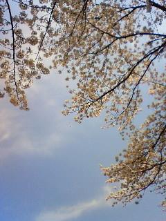 f:id:kusaboshi:20080406102800j:image