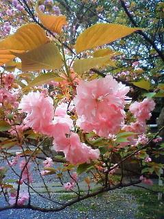 f:id:kusaboshi:20080416104000j:image