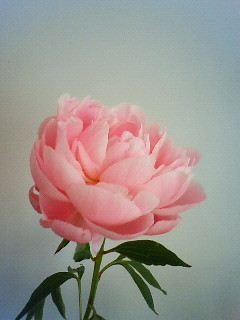 f:id:kusaboshi:20080518094900j:image