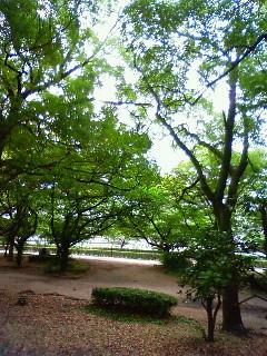 f:id:kusaboshi:20080619162200j:image