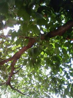 f:id:kusaboshi:20080712101800j:image