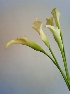 f:id:kusaboshi:20080716122600j:image