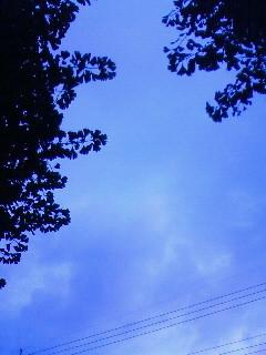 f:id:kusaboshi:20080727183600j:image