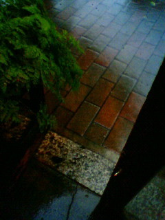f:id:kusaboshi:20080728175700j:image