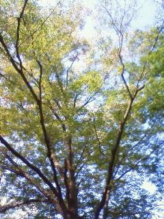 f:id:kusaboshi:20081021104000j:image
