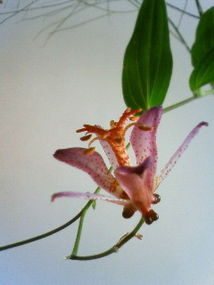 f:id:kusaboshi:20081024130100j:image