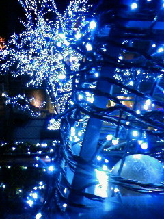 f:id:kusaboshi:20081228225400j:image