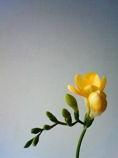 f:id:kusaboshi:20090121123200j:image