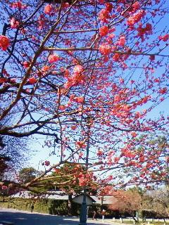 f:id:kusaboshi:20090205124600j:image