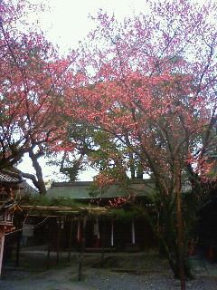 f:id:kusaboshi:20090304105600j:image