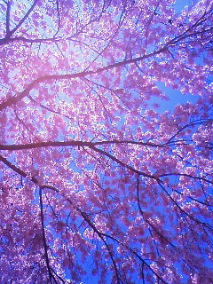 f:id:kusaboshi:20090326105300j:image