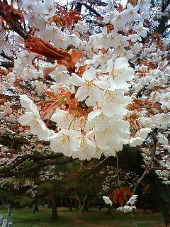 f:id:kusaboshi:20090331094200j:image