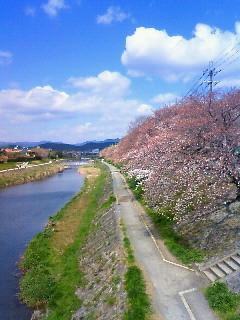 f:id:kusaboshi:20090402130700j:image