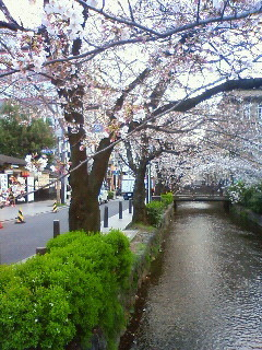 f:id:kusaboshi:20090402165200j:image