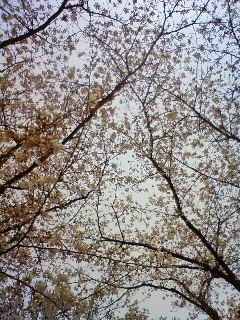 f:id:kusaboshi:20090403104200j:image