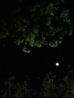f:id:kusaboshi:20090405213700j:image