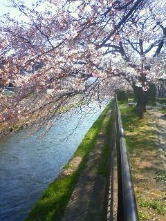 f:id:kusaboshi:20090406092000j:image