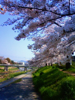 f:id:kusaboshi:20090407090500j:image