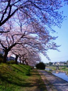 f:id:kusaboshi:20090407090900j:image