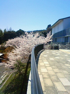 f:id:kusaboshi:20090409112700j:image