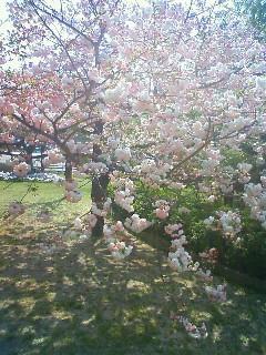 f:id:kusaboshi:20090413095500j:image