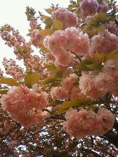 f:id:kusaboshi:20090416154500j:image