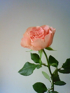 f:id:kusaboshi:20090610111300j:image