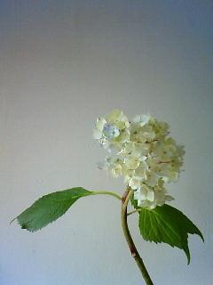 f:id:kusaboshi:20090610111700j:image