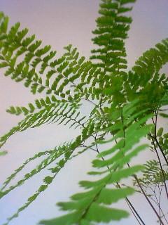 f:id:kusaboshi:20090624130000j:image
