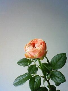 f:id:kusaboshi:20090705111800j:image