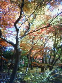 f:id:kusaboshi:20091126131100j:image